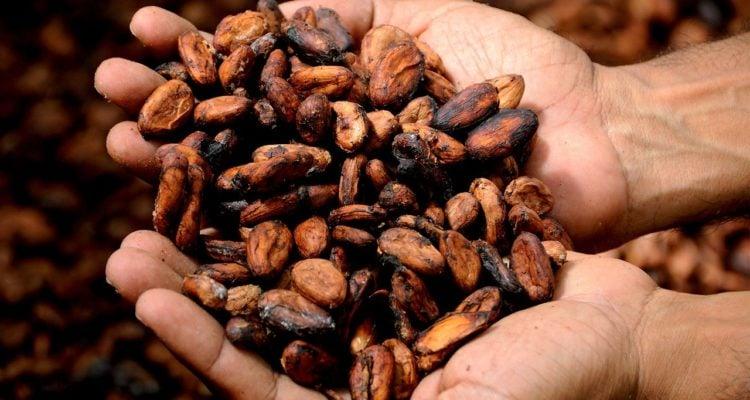 Masło kakaowe i jego właściwości. Co o nim wiemy?