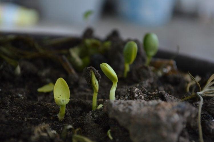 Kompostownik w ogrodzie. Co warto wiedzieć?