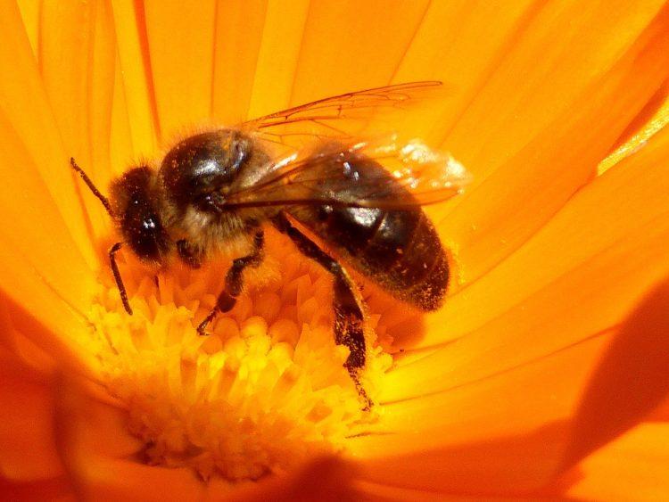 Miód i pyłek kwiatowy. bomba witamin i minerałów