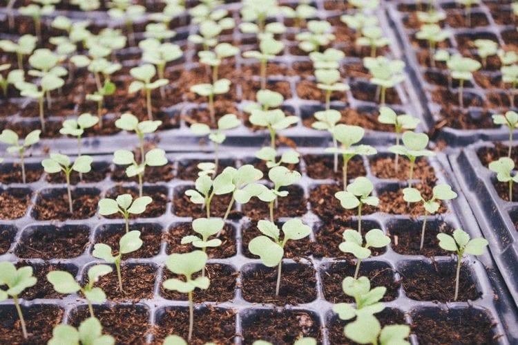 Poradnik. 10 warzyw, które można uprawiać na okrągło.