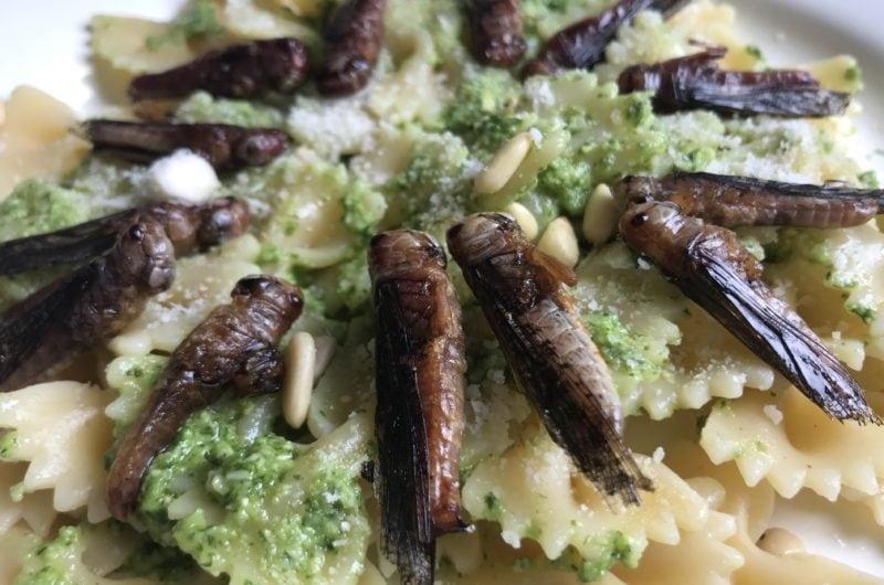 Jadalne owady. Makaron z konikami polnymi i pesto