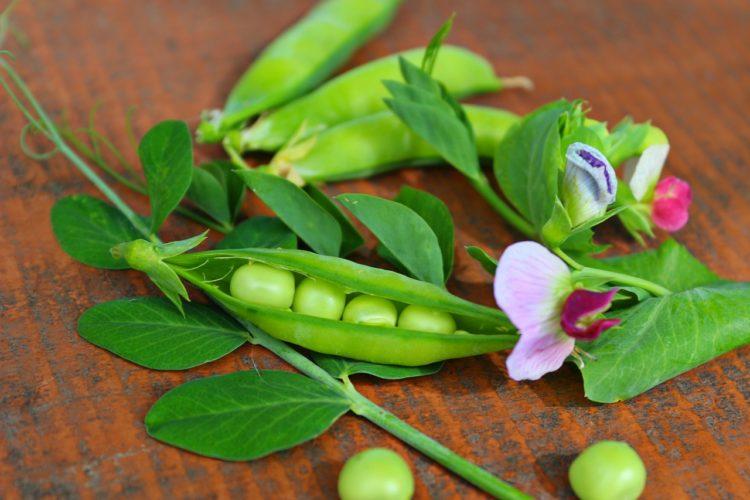 Dlaczego warto sięgać po warzywa strączkowe?