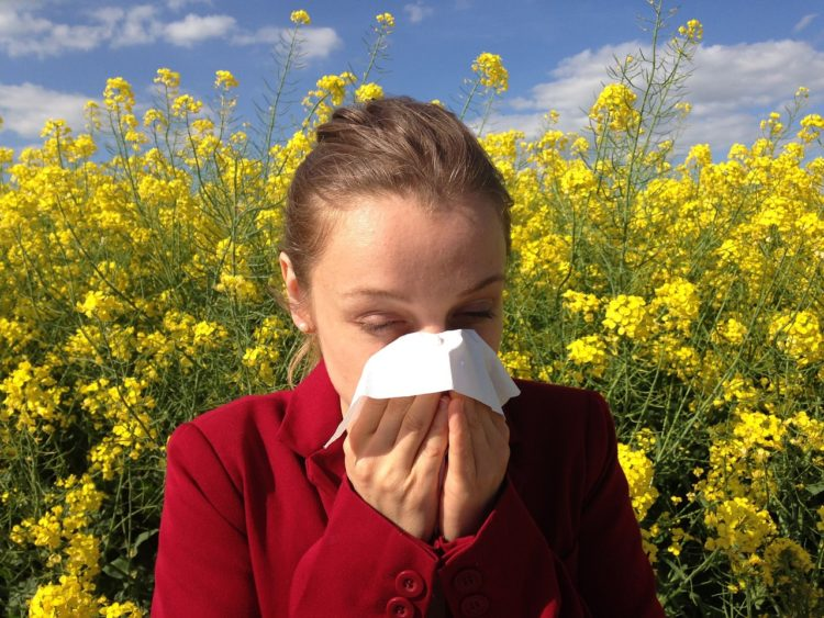 Cuda natury. Rośliny, które łagodzą skutki alergii.