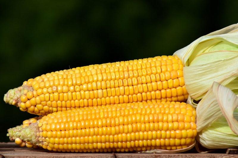 Gotowane kolby kukurydzy z masłem i solą