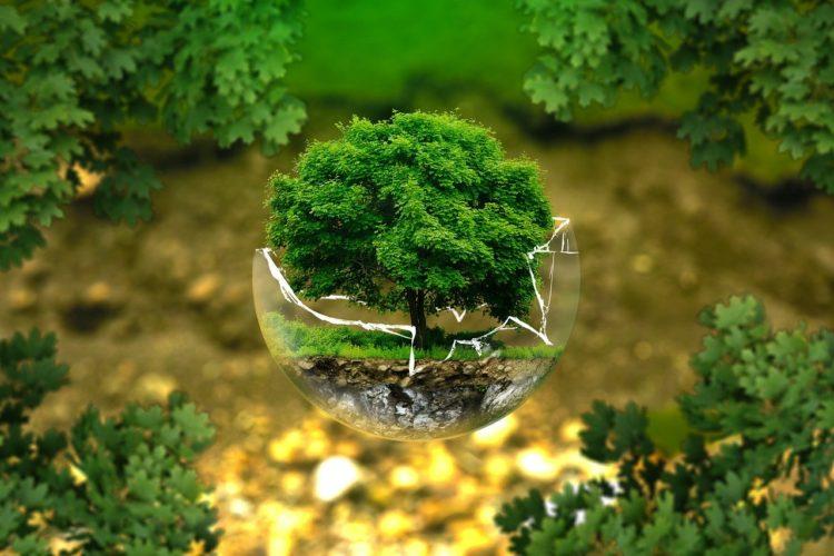 Jak być ekologicznym w biurze