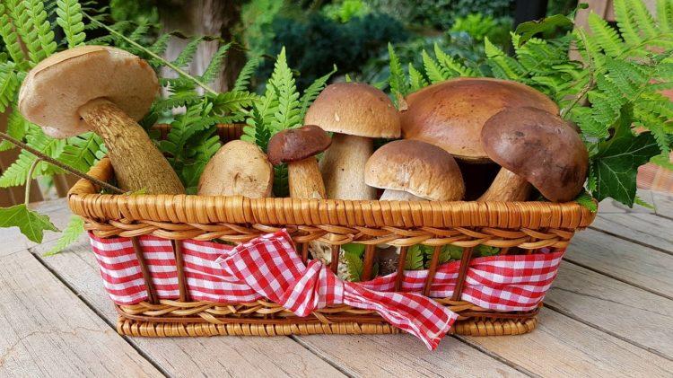 O czym pamiętać wybierając się na grzyby?