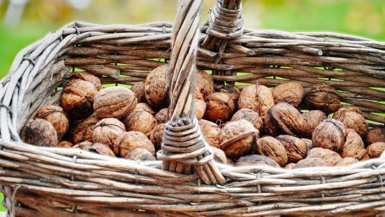 Korzyści wynikające z jedzenia orzechów