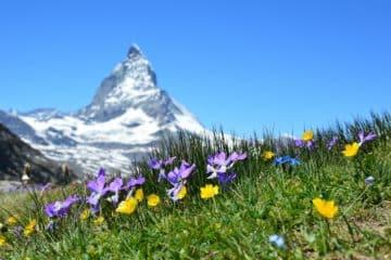Bogactwo smaków kuchni szwajcarskiej