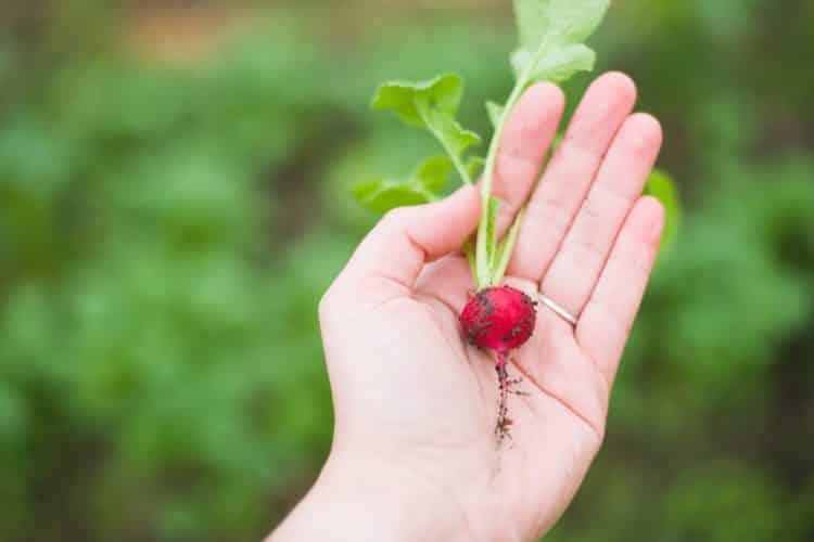 Jak przemycić do diety dziecka więcej warzyw