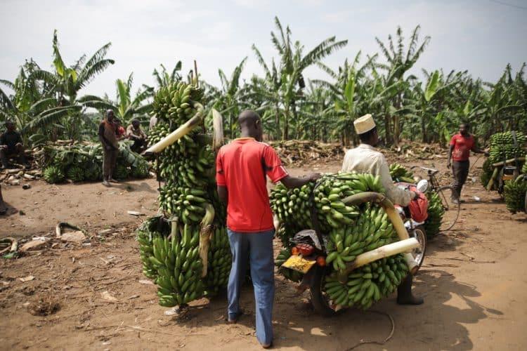 Banany. Zdrowa, tropikalna, bananowa kuchnia